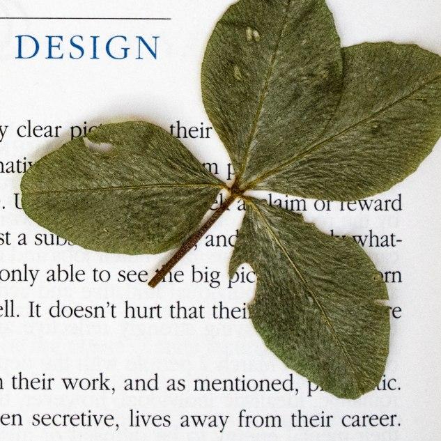 komedal road - four leaf clover1