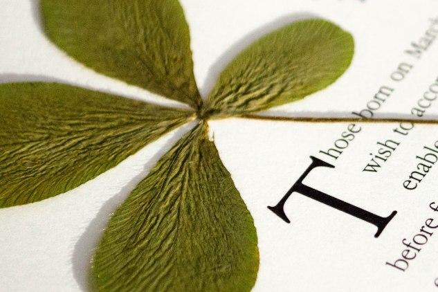 komedal road - four leaf clover2