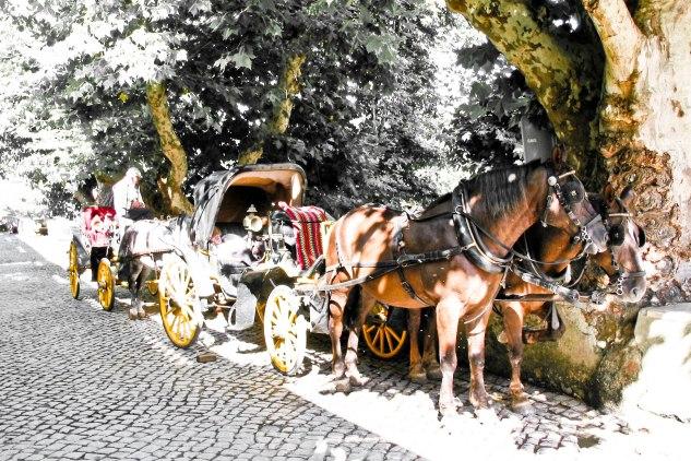 Komedal Road - Portugal 2