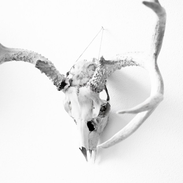 Komedal Road - Sept. 2014 - Studio Art Walk - Skull with Antlers