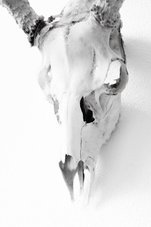 Komedal Road - Sept. 2014 - Studio Art Walk - Skull