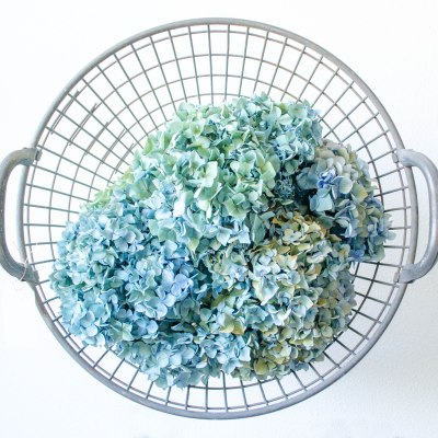 Komedal Road - Sept. 2014 - Studio Art Walk - Metal Basket with Hydrangeas