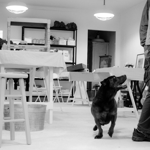 Komedal Road - Paint Like a Pro Workshop - Studio Dog