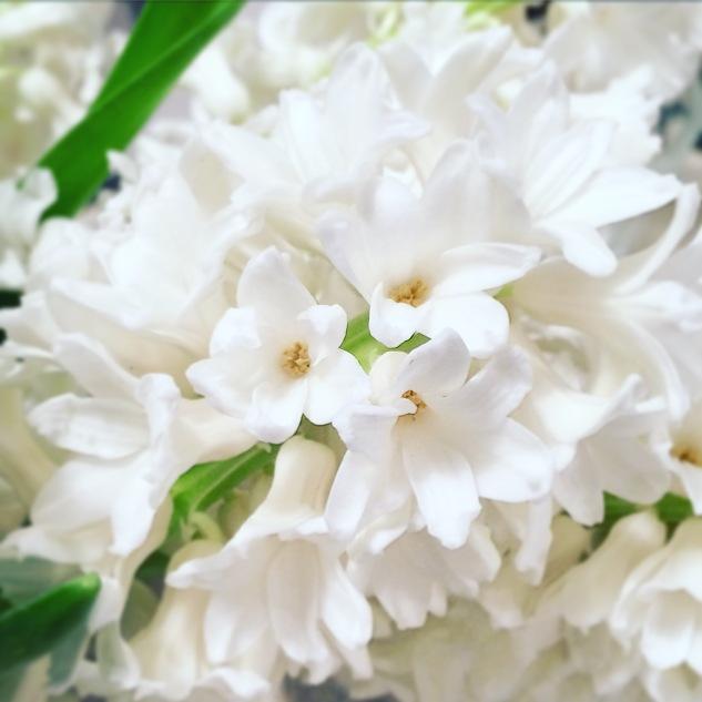 Komedal Road - Garden House Vintage - Hyacinth