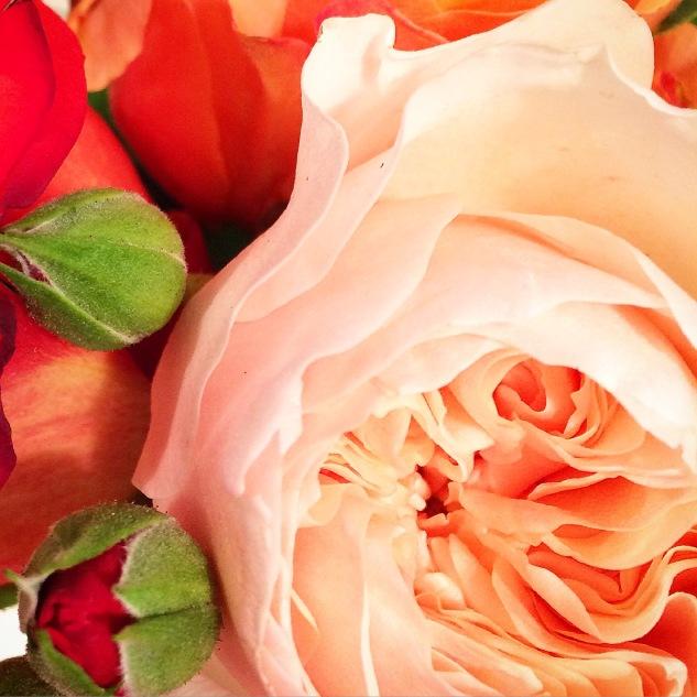 Komedal Road - Garden House Vintage - Rose